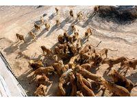 foto-galeri-aslanlar-koyunu-paramparca-etti-11005.htm