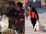 foto-galeri-canli-canli-aslanlara-attilar-11200.htm