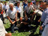 foto-galeri-rizeli-cay-uretici-gerildi-12385.htm