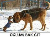 foto-galeri-oglum-bak-git-12441.htm