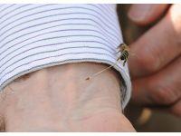 İşte arının insanı soktuğu an
