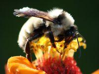 Arıların müthiş özellikleri