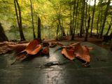 Türkiye'de Sonbahar Manzaraları