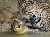 Vahşi yaşamdan inanılmaz av kareleri...