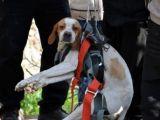 Adana'da köpek kurtarma operasyonu