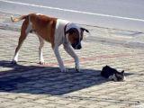 Yaralı kedi için köpeğin yardım çağrısı