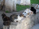 Sokak kedilerinin de evi oldu