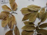 Kurulumuş Bitki Örnekleri Kolleksiyonu