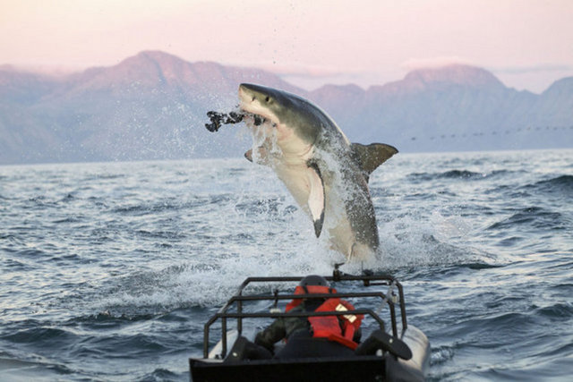 Okyanusun Derinliklerinden Sıyrılmış Beyaz K 246 Pekbalığı