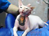 Hayvanlara Yapılan Dövmeler