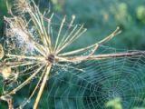 Örümcek ağının mucizevi özellikleri