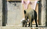 foto-galeri-yavru-fil-izmirin-ilk-kez-yayinlanan-goruntuleri-2426.htm