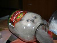 foto-galeri-kediler-nereye-girmez-ki-2433.htm