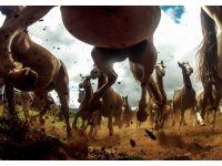 foto-galeri-muhtesem-kareler-national-geographic-2013-24447.htm