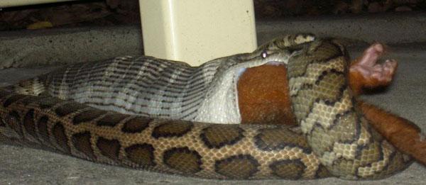 Yılanlar aç kalırsa! foto galerisi resim 1