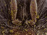 foto-galeri-ari-poleninin-faydalari-2702.htm