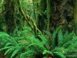 foto-galeri-kuranda-adi-gecen-bitkiler-2790.htm