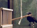 foto-galeri-karganin-hayran-birakan-zekasi-28684.htm