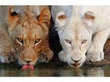 Bu hayvanlar diğerlerinden çok farklı!