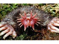 foto-galeri-dunyanin-en-ilginc-ve-en-bilinmeyen-hayvanlari-3001.htm