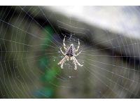 Örümcek ağı çelikten daha sağlam