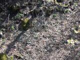 foto-galeri-yilanlarin-gocu-dehsete-dusurdu-33140.htm