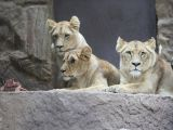 foto-galeri-vahsi-dogada-ilginc-anlar-35868.htm