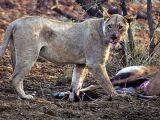 foto-galeri-avinin-hamile-oldugunun-ogrenince-35945.htm