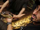 Kafası insan kadar olan yılan