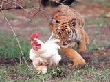 foto-galeri-bunlarin-hepsi-bir-acayip-38147.htm