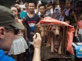 Yok Böyle Festival! Çinliler 40 Bin Köpeği Yediler