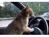 foto-galeri-feline-road-rage-4385.htm