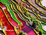 Büyüleyen pirinç tarlaları