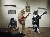 foto-galeri-kedi-kedi-olali-8185.htm
