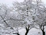 foto-galeri-beyaz-ortu-turkiyeyi-sardi-8409.htm