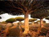 foto-galeri-yeryuzunun-gizemli-adasi-864.htm