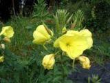 'Ezan çiçeği'nin görsel şöleni