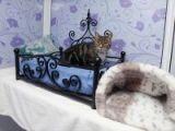 Kedilere 5 yıldızlı tatil