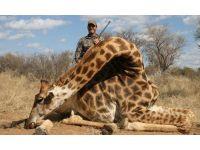 10.000 sterline zürafa avı!