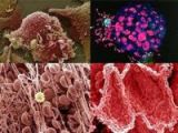 Vücudumuzdan 15 muhteşem görüntü