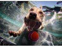Köpeklerin su altı halleri