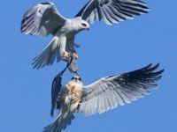 Gökyüzünde av mücadelesi