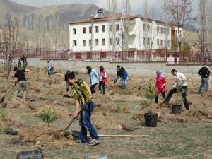 Oltuda 466 Adet Sarıçam, Fakülte Kampusüne Dikildi