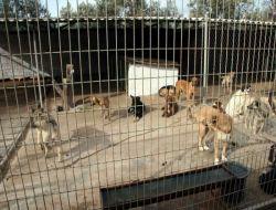 Burhaniye Köpek Barınağı Denetlendi - Balıkesir