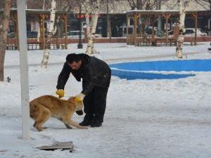 Ardahanda Sokak Köpekleri Toplanıyor