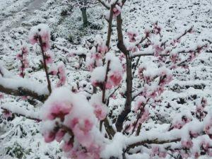 Ispartalılar 9 Nisanda Gözlerini Kar Yağışı ile Birlikte Açtı