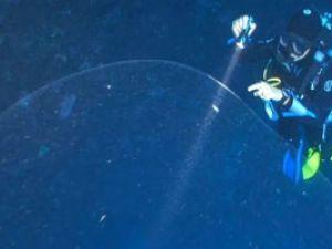 Su Altında İnanılmaz Doğa Olayı: Şeffaf Yumurta Kütlesi