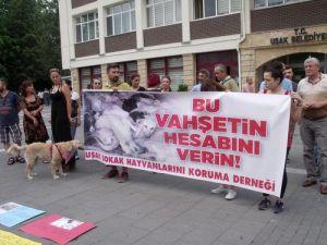 Uşakta Ölen 50, Kaybolan 300 Köpeğin Sorumlusu Aranıyor