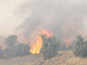 Bingölde Orman Yangını