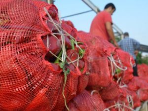Kozanda Salçalık Biber Sezonu Açıldı, Vatandaş Fiyattan Şikâyetçi